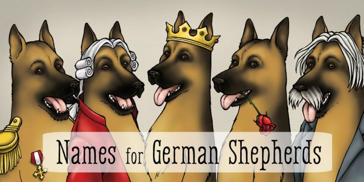 45 Best Dog Names for German