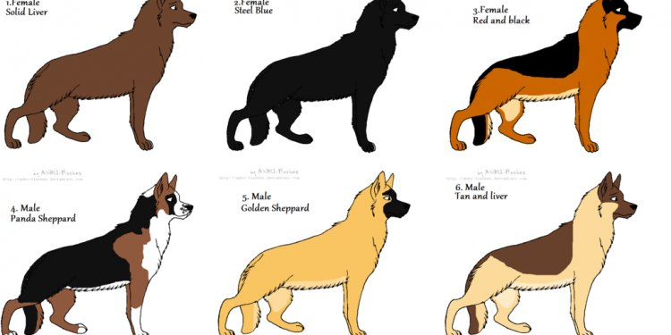 Adoptable German Shepherds by