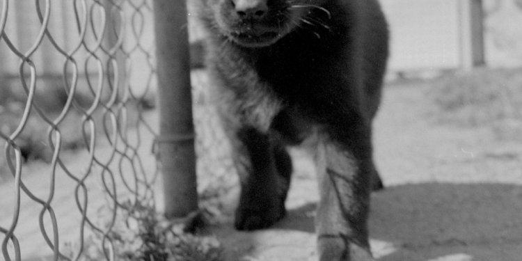 Black Puppy - Hilltop