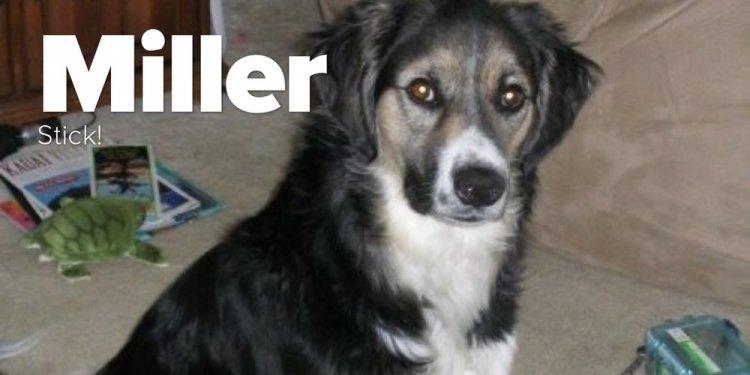 Meet Miller The Australian