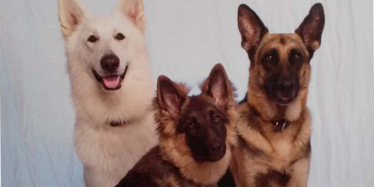 Cottonwood German Shepherds