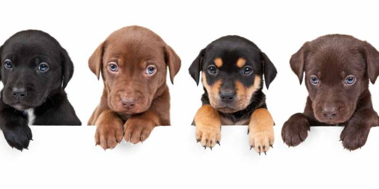 Dog Names By Breed: One Of A