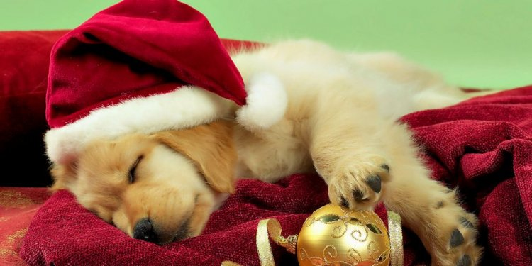 Cute Christmas Puppy Pictures
