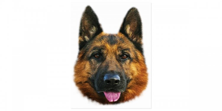 German Shepherd Alsatian K-9