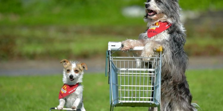 How to shop for a dog in