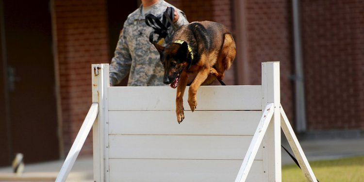 Military Police Working Dog demonstration for Humphreys Elementary School First Grade students Oct. 7...