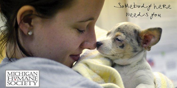 Pet Adoption - Michigan Humane