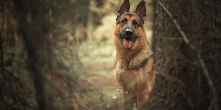 Pet Theft Awareness: 10