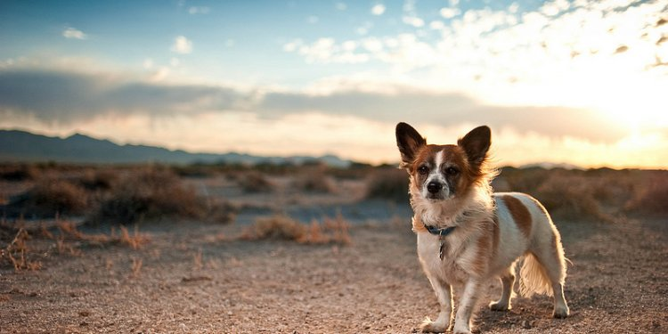 Photography by Simply Dog Photography