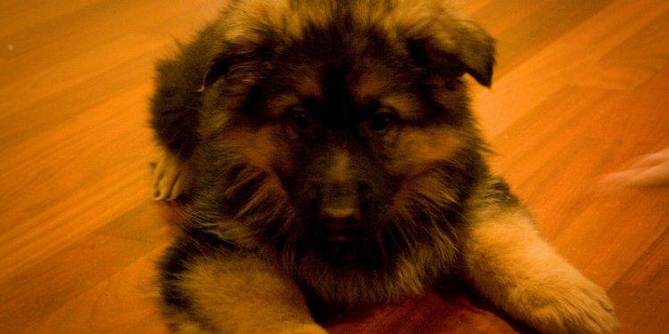 Puppy Nicky (2