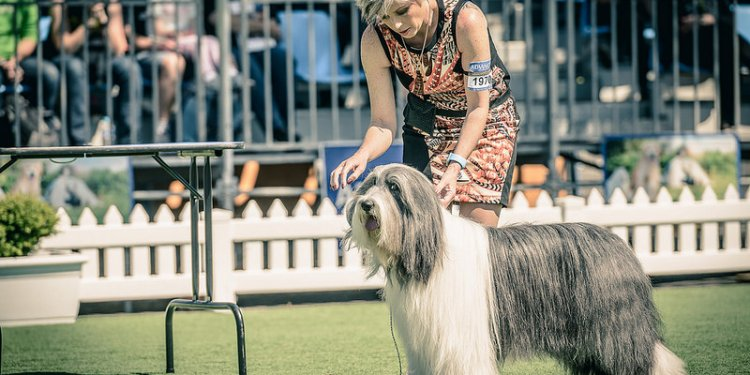 2015 Royal Melbourne Show