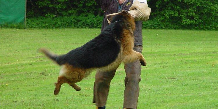 Shutzhund
