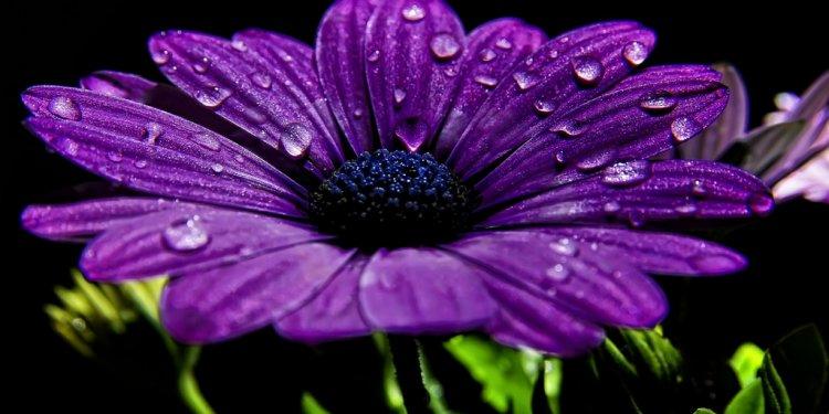 #flowers #wildflowers #garden