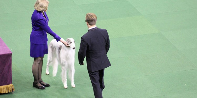 2014 Westminster Kennel Club Dog Show