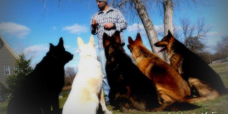 The Dog Shepherd