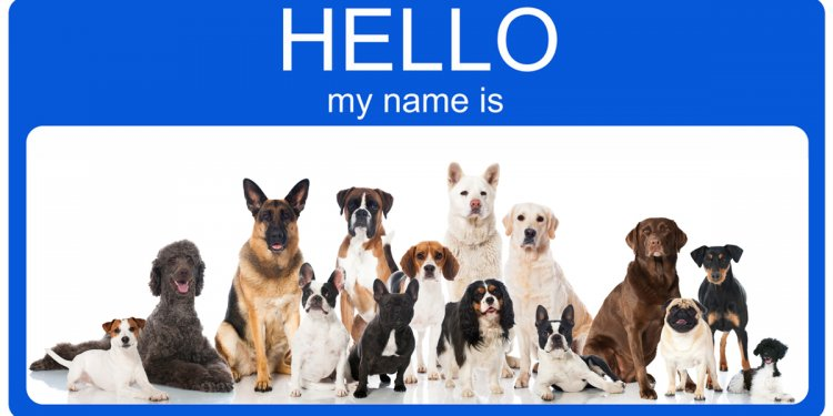 Female dog names - Dogtime