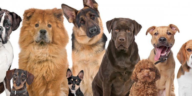Which type of dog are you |