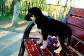 A puppy standing up on a park bench looking into the distance