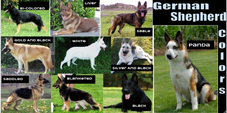 Are black German Shepherds rare