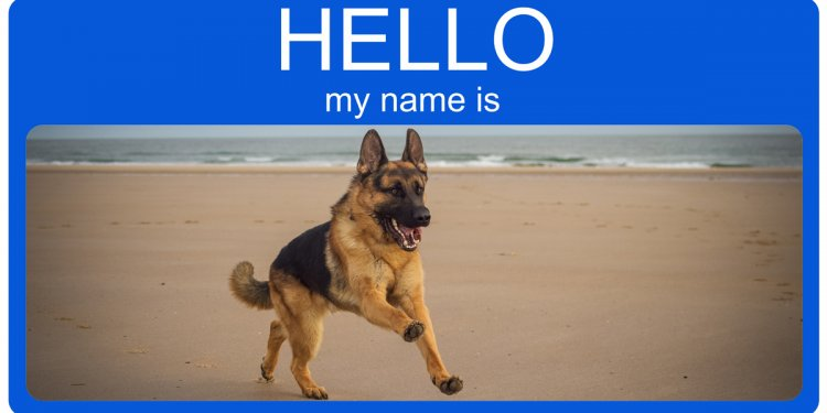 German Shepherds dog names