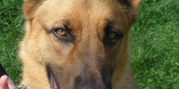 Strong male dog names for German Shepherds