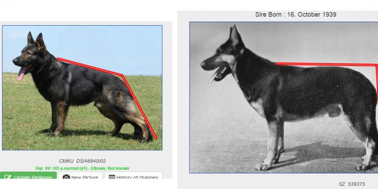 German Shepherd Dog Pedigree Database
