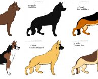 Different breeds of Shepherd dogs