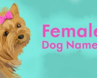 German female dog names for German Shepherds
