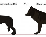 German Shepherd Dog colors