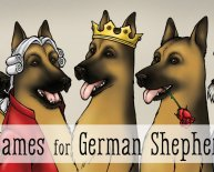 German Shepherds guard Dog